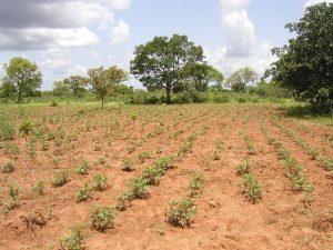 زراعة الصحراء