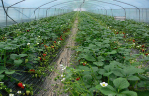 صوبة زراعية