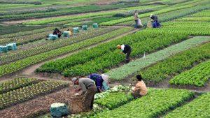 القطاع الزراعى