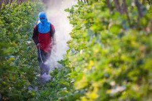 المبيدات المسرطنة