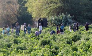 تدنى حقوق العمالة الزراعية