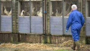 فرنسا تخشى انتشار سلالة قاتلة من فيروس إنفلونزا الطيور