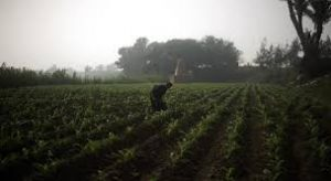 تنحية الحجر الزراعى عن الرقابة على المحاصيل الزراعية قرار خاطىء