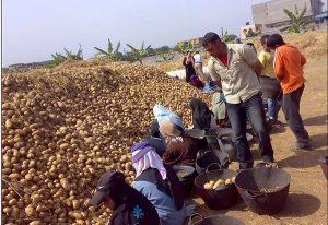 الآثار السلبية لاتفاقية المشاركة المصرية الأوروبية فى جانبها الزراعى على الفلاحين