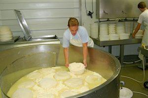 مشروع لإنتاج الجبن الأبيض