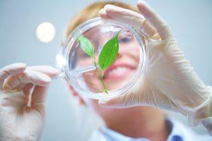 النانوتكنولوجى فى المجال الزراعى
