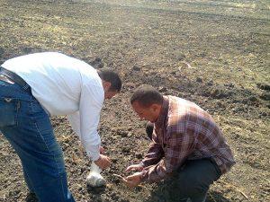 أخذ عينات من التربة قبل زراعتها بالقمح
