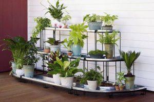 نباتات زينة منزلية