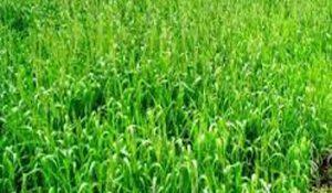 دعم الفلاح بمستلزمات الإنتاج الزراعى