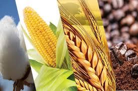 نقل فحص بعض المحاصيل الاستراتيجية إلى وزارة الصناعة