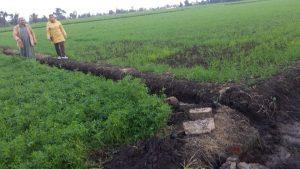 د.شيماء الدسوقى تتابع زراعات القمح