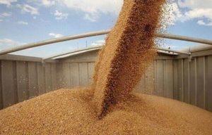 رصيد القمح يكفى لاحتياجات مصر 4 أشهر
