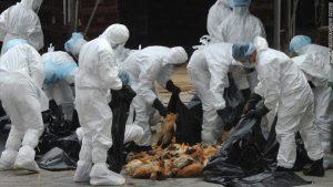 إجراءات احترازية فى ألمانيا والدنمارك لمكافحة إنفلونزا الطيور