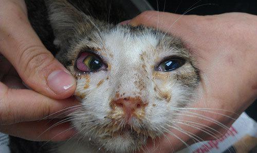 لا أحد طفل همبرغر علاج انفلونزا القطط في المنزل Comertinsaat Com