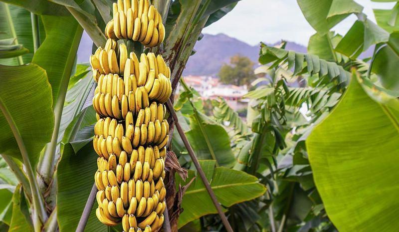 الفاكهة الشهيرة تحارب التوتر النفسي 1-130.jpg