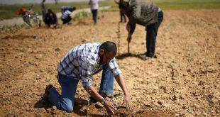 الخريجون يزرعون الأرض